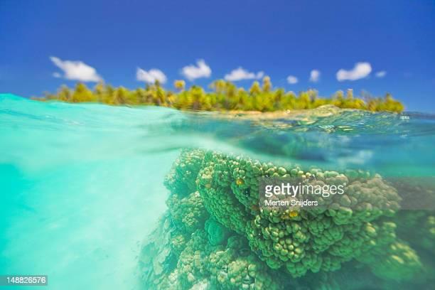 underwater coral and motu on surface of the blue lagoon. - merten snijders stockfoto's en -beelden