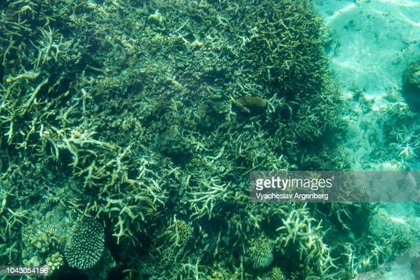 underwater coral, crystal clear turquoise waters, biodiversity of palawan island, philippines - argenberg photos et images de collection