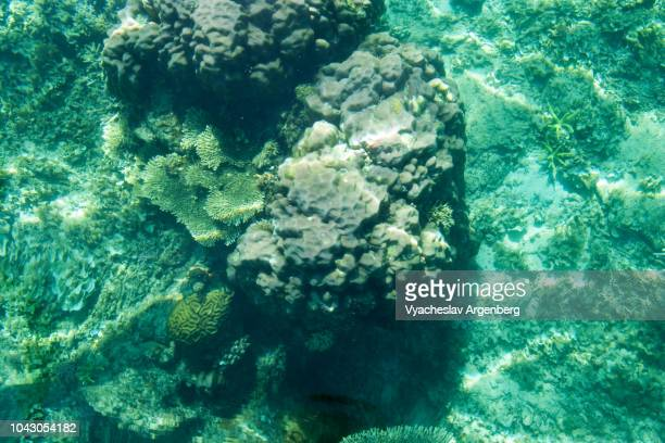 underwater coral, crystal clear turquoise waters, tropical bliss, el nido bay, palawan, philippines - argenberg ストックフォトと画像