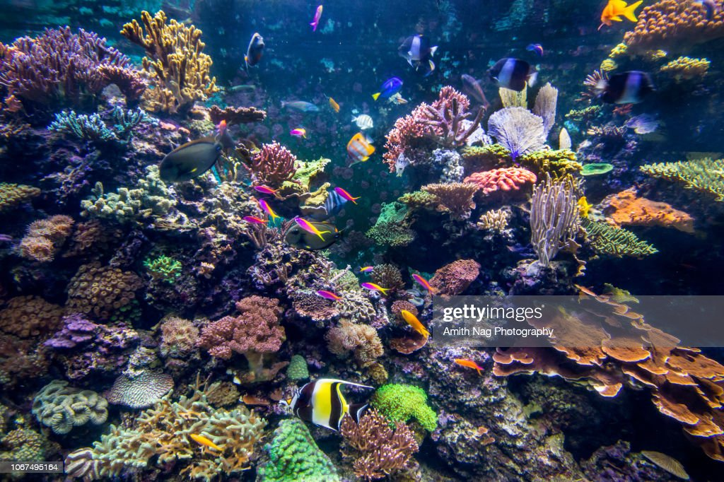 Underwater coral reef fish shoal landscape. Coral reef underwater world : Stock Photo