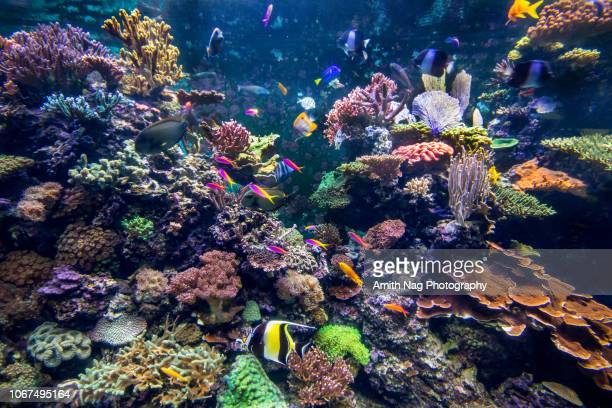 underwater coral reef fish shoal landscape. coral reef underwater world - reef stock pictures, royalty-free photos & images