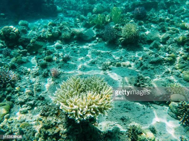 recife coral subaquático no mar vermelho - coral cnidário - fotografias e filmes do acervo