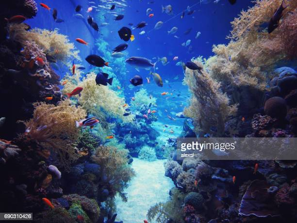 underwater coral reef in red sea - coral sea stock photos and pictures