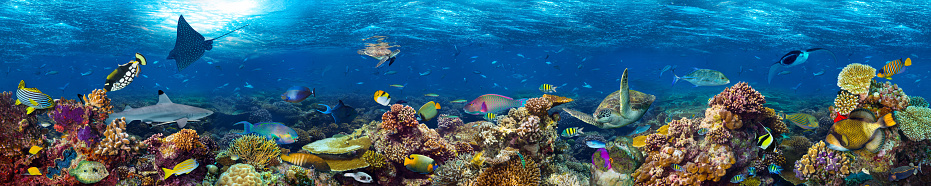 underwater coral reef landscape 642258830