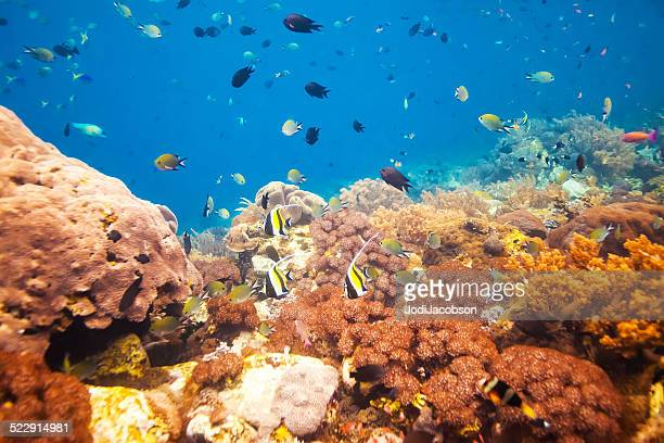 Underwater coral reef with an abundance of fish