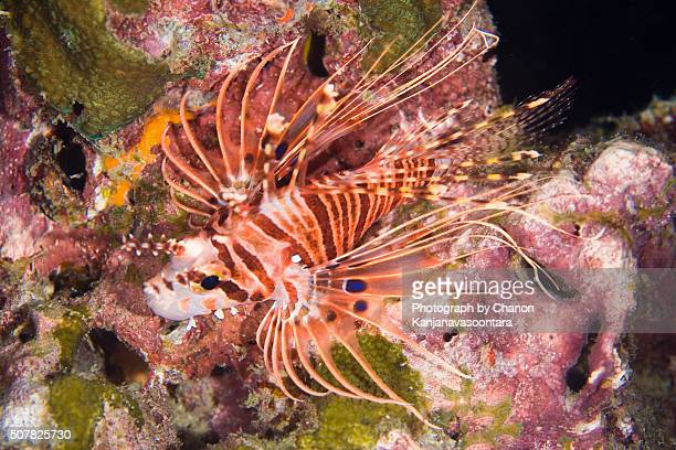 Underwater Creature of Andaman Sea, Thailand