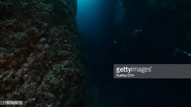 海底渓谷での水中ダイビング - 海洋生物 ストックフォトと画像