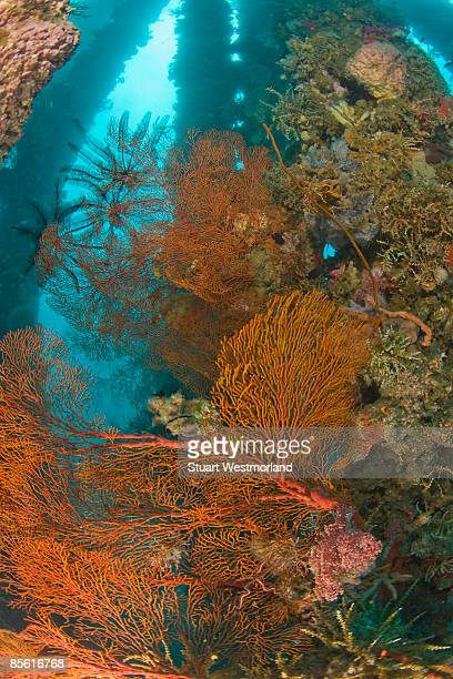 underwater dumaguete pier - negros oriental stock pictures, royalty-free photos & images