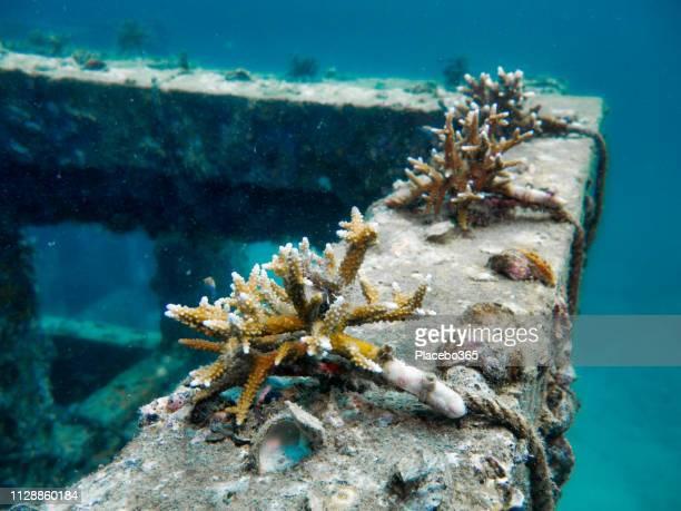 水中エコ観光人工リーフ、革新的なサンゴ再生プロジェクト、ヴァイキング ベイ、ピピ島、タイ - ハードコーラル ストックフォトと画像