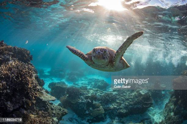 underwater heron island - great barrier reef stock pictures, royalty-free photos & images