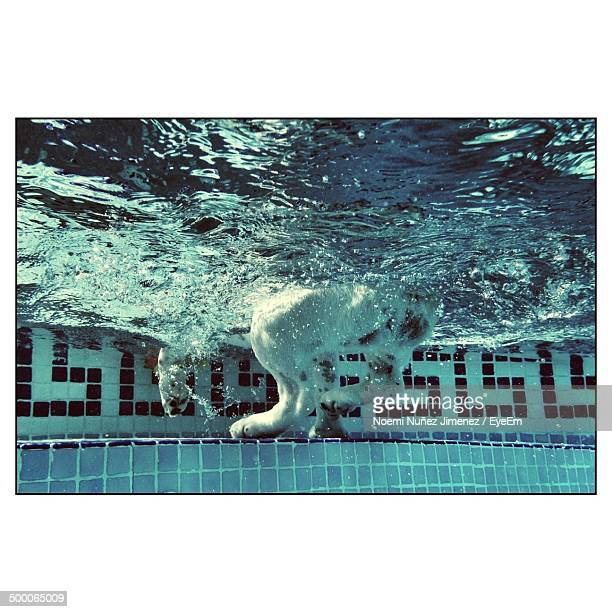 Underwater image of dog in swimming pool
