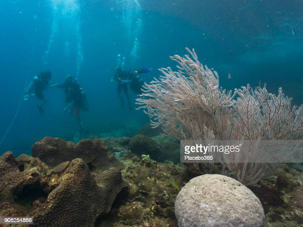 Underwater image of scuba divers on Gorgonia Coral Reef