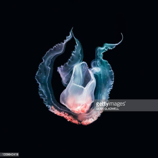 underwater jellyfish - undersea stock pictures, royalty-free photos & images