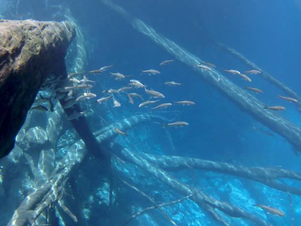Underwater Lake Kaco