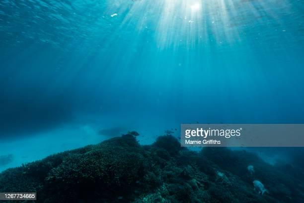 underwater landscape - ocean floor stock pictures, royalty-free photos & images