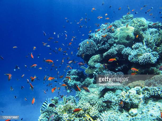 underwater landscape red sea - undersea stock pictures, royalty-free photos & images