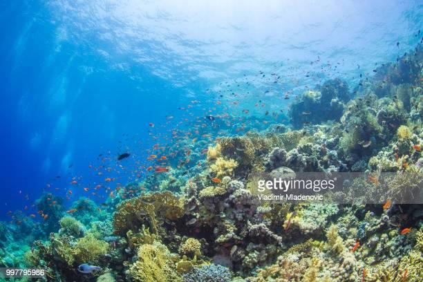 Onderwater landschap met koralen