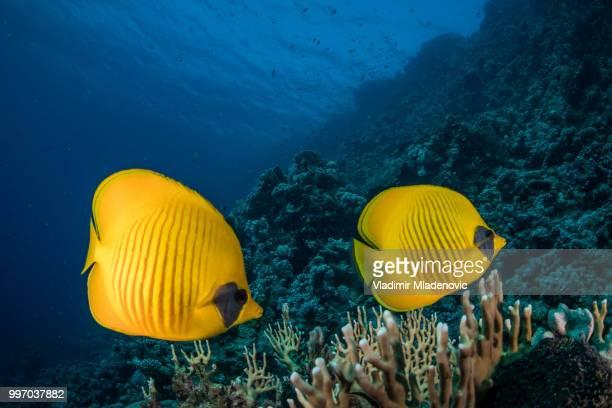 Onderwater landschap met vis