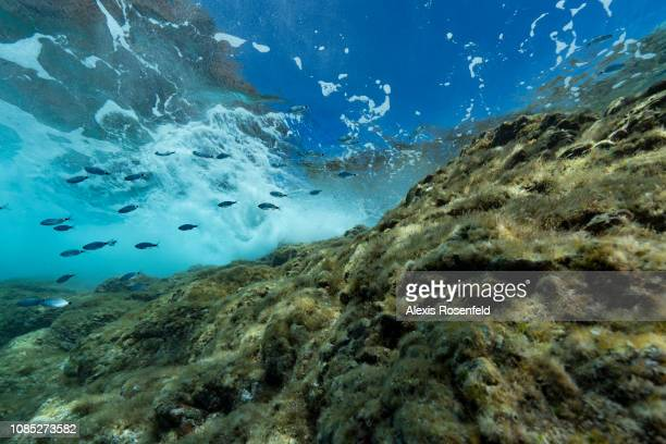SCANDOLA CORSICA MEDITERRANEAN FRANCE JUNE 19 Underwater life below the surface of the Mediterranean on june 19 2017 in Scandola marine Reserve...