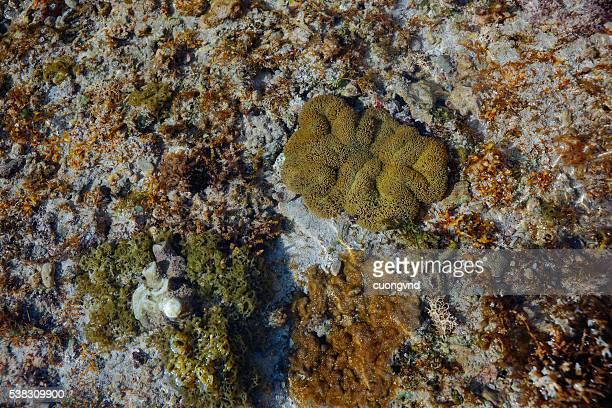 underwater life - quảng ngãi bildbanksfoton och bilder