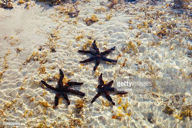 underwater life - quảng ngãi stockfoto's en -beelden