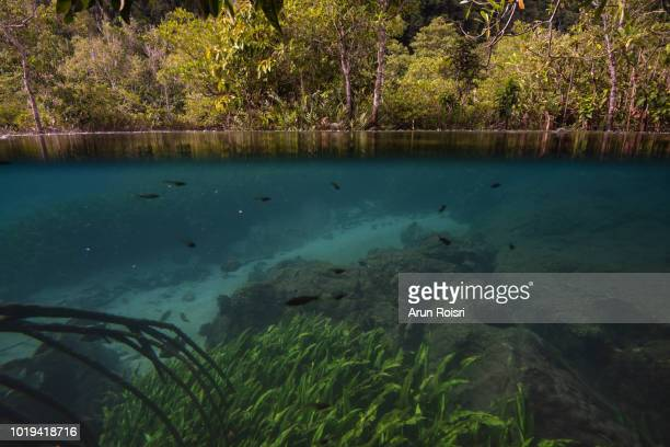 underwater life systems and mangrove trees in a peat swamp forest. tha pom canal area, krabi province, thailand - geographical locations stock pictures, royalty-free photos & images