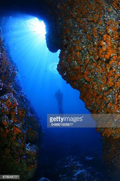 underwater light - fundo do mar imagens e fotografias de stock