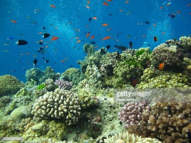 underwater marine life - great barrier reef stock pictures, royalty-free photos & images