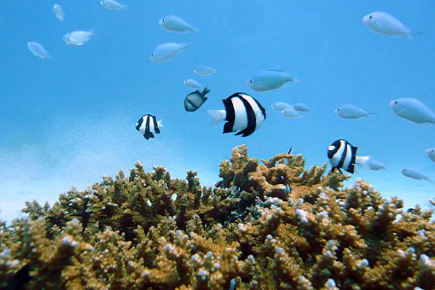 Underwater Okinawa