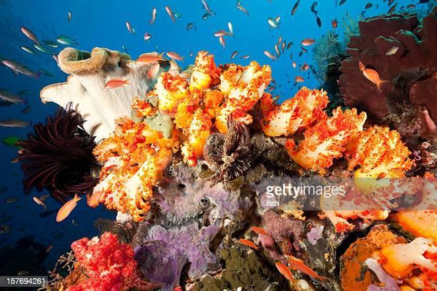 Paraíso debajo del agua con naranjas Coral blando, parque nacional de Komodo, Indonesia