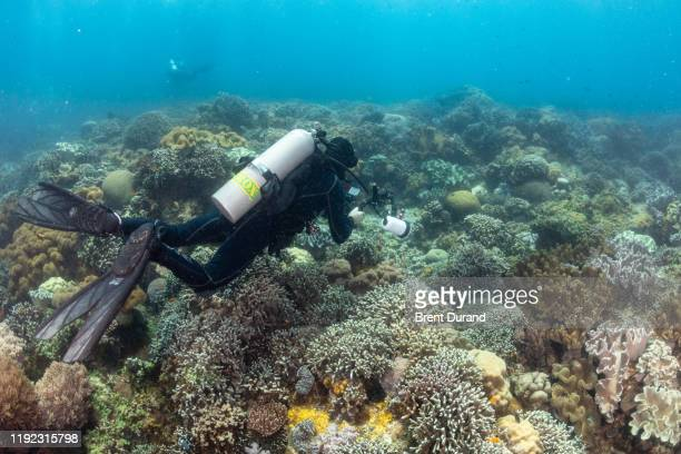 underwater photographer and coral reef - indo pacific ocean stock pictures, royalty-free photos & images