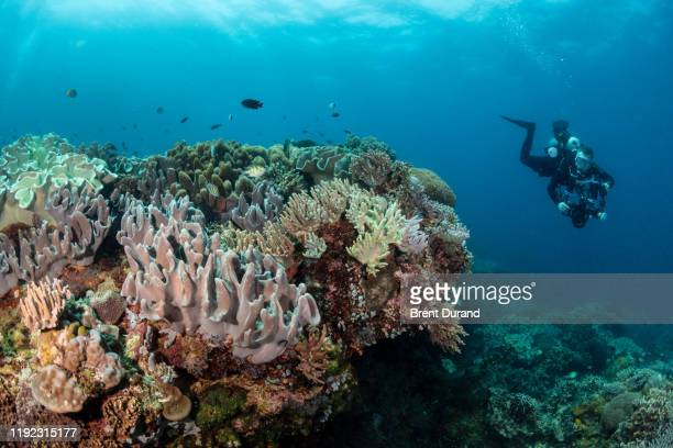underwater photographer in the philippines - indo pacific ocean stock pictures, royalty-free photos & images