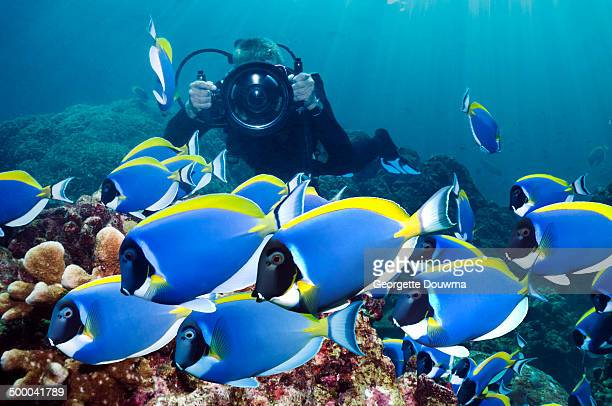 Underwater photographer with surgeons