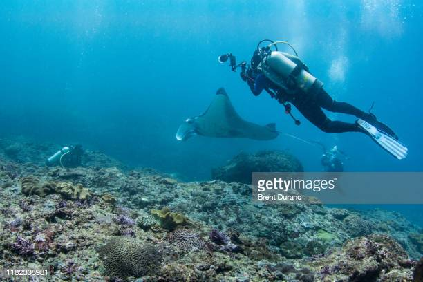 underwater photographers and manta ray at nusa penida - indo pacific ocean stock pictures, royalty-free photos & images