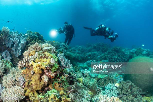 underwater photographers in philippines - indo pacific ocean stock pictures, royalty-free photos & images
