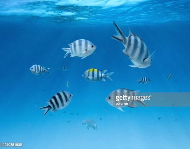 underwater - undersea stock pictures, royalty-free photos & images