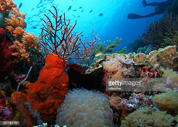 Underwater reef with coral and fish