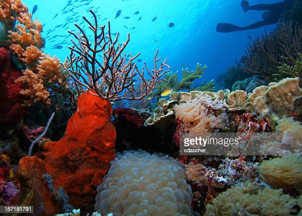 Recife Cena submarina