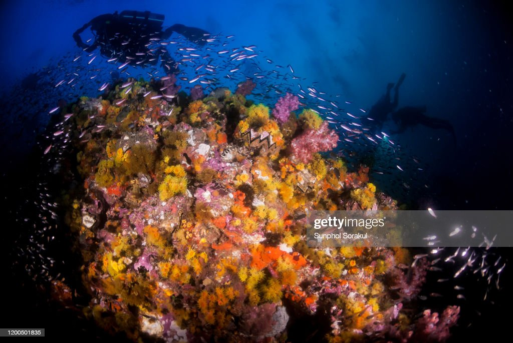 Underwater scene of a colourful reef covered in sea anemone : Stock Photo