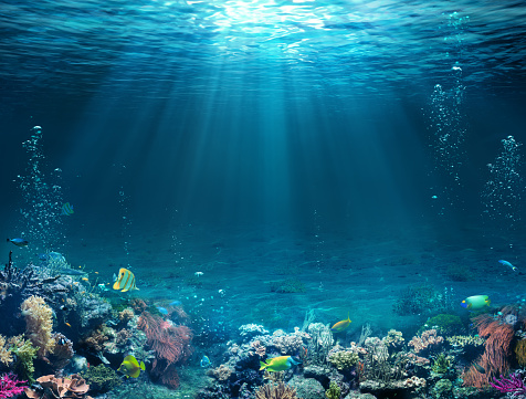 Underwater Scene - Tropical Seabed With Reef And Sunshine. 1152237432