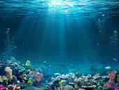 Underwater Scene - Tropical Seabed With Reef And Sunshine.