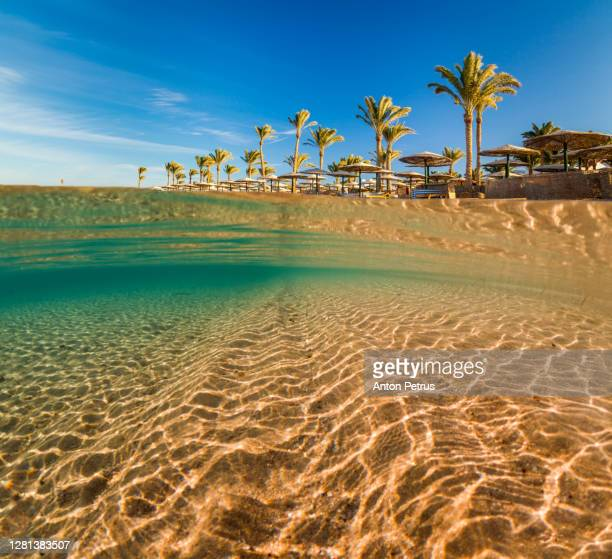 underwater scene with clear water near a tropical beach. egypt - scuba diving stock pictures, royalty-free photos & images