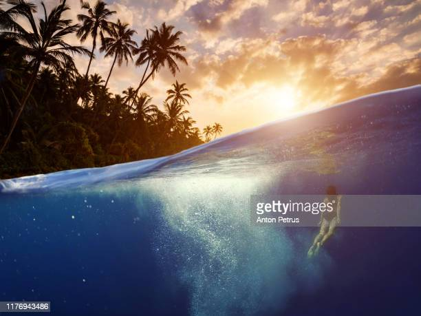 underwater scene with tropical fishes. snorkeling in the tropical sea - snorkeling stock pictures, royalty-free photos & images