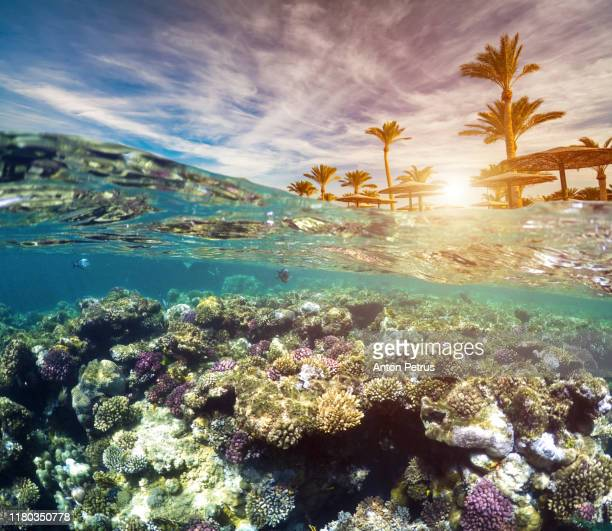 underwater scene with tropical fishes. snorkeling in the tropical sea - reef stock pictures, royalty-free photos & images