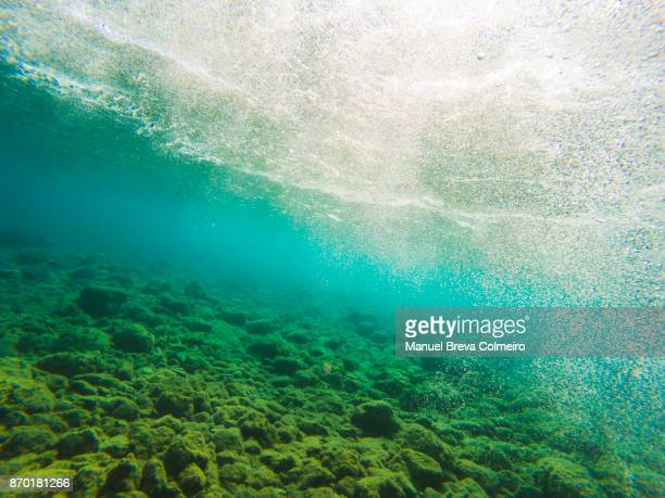 underwater scenery - ecosystem stock pictures, royalty-free photos & images