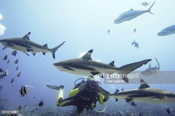 underwater scenes - lagarde stock photos and pictures