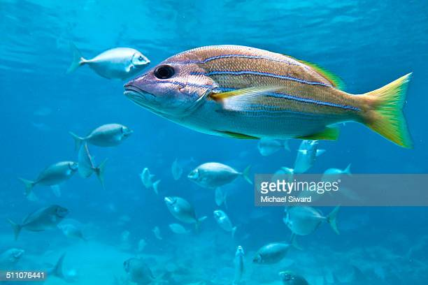 underwater scenes - michael siward stock pictures, royalty-free photos & images