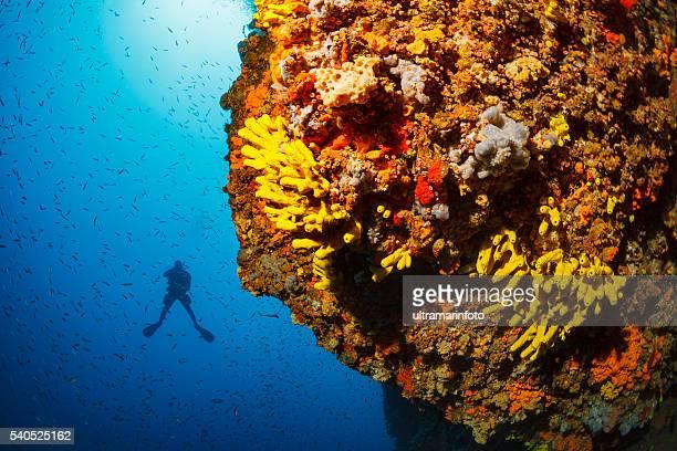 underwater  scuba diver enjoy  explore coral reef   sea life   sponge - adriatic sea stock pictures, royalty-free photos & images