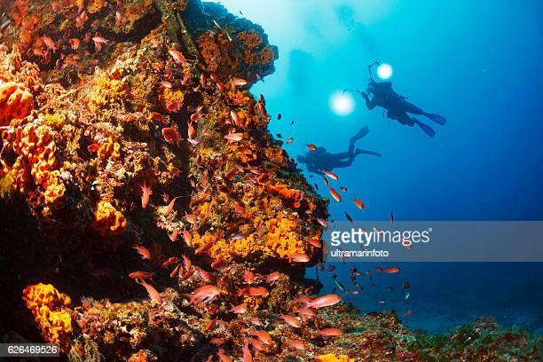 Underwater  Scuba diver enjoy  Explore coral reef   Sea life   Sponge