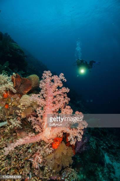 水中スキューバダイバーはサンゴ礁の海の生活を探索し、楽しむ - スクーバダイビングの視点 ストックフォトと画像
